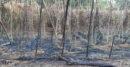 হরিণাকুন্ডু শুড়া গ্রামে সিগারেটের আগুনে পুড়ল পানবরজ, ৩ লাখ টাকার ক্ষতি