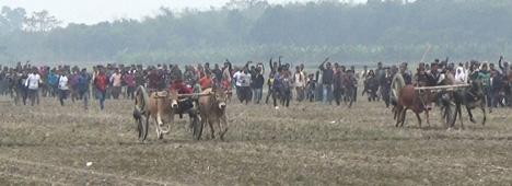 ঝিনাইদহে ঐতিহ্যবাহী গরুর গাড়ী দৌড় প্রতিযোগীতা অনুষ্ঠিত