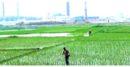 গাজীপুরে অবৈধ ইটভাটা বন্ধ :কৃষিতে উন্নয়নের স্বপ্ন দেখছেন কৃষকেরা