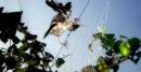 ঝিনাইদহে কারেন্ট জালে মারা পড়ছে বিপন্ন প্রজাতির পাখি