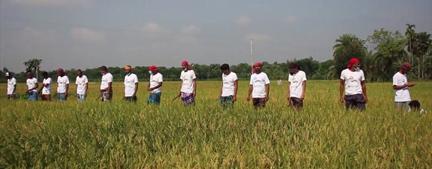 ঝিনাইদহে এবার কৃষকের ধান কেটে দিল স্বেচ্ছাসেবক দল