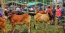করোনা ভাইরাস পরিস্থিতিতে ঝিনাইদহ পশুহাটে নেই বেপারী ও বেঁচা-কেনা বিপাকে